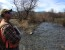 Ackerman Creek Spawner Survey